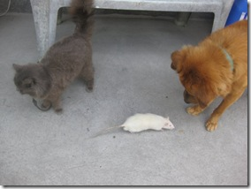 The Cat, The Mouse and The Dog
